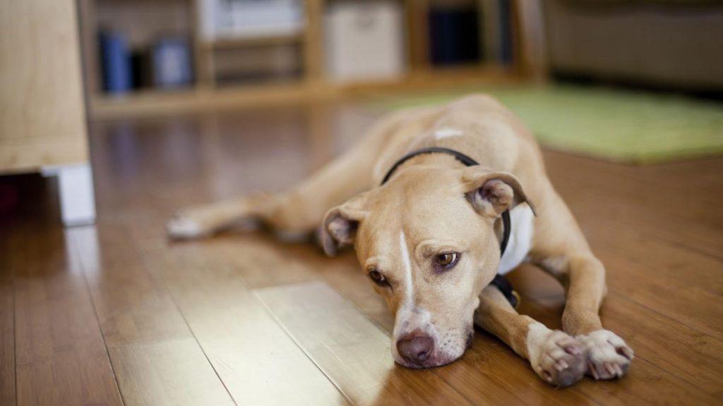 Depressão em Cachorros e Gatos: como identificar e tratar 1
