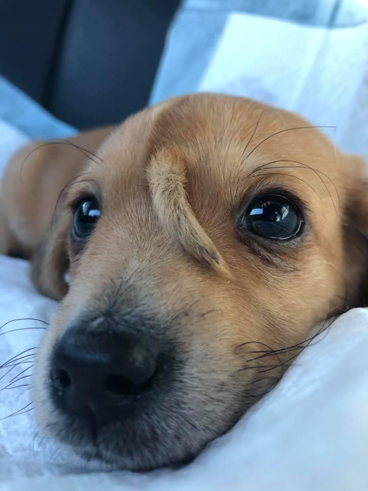 Filhote de cão unicórnio é resgatado e surpreende a todos! 4