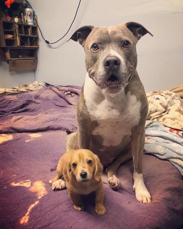 Filhote de cão unicórnio é resgatado e surpreende a todos! 2