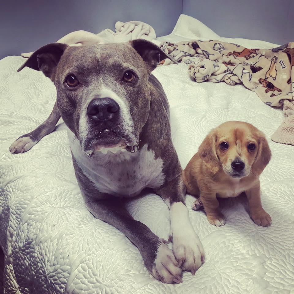 Filhote de cão unicórnio é resgatado e surpreende a todos! 5