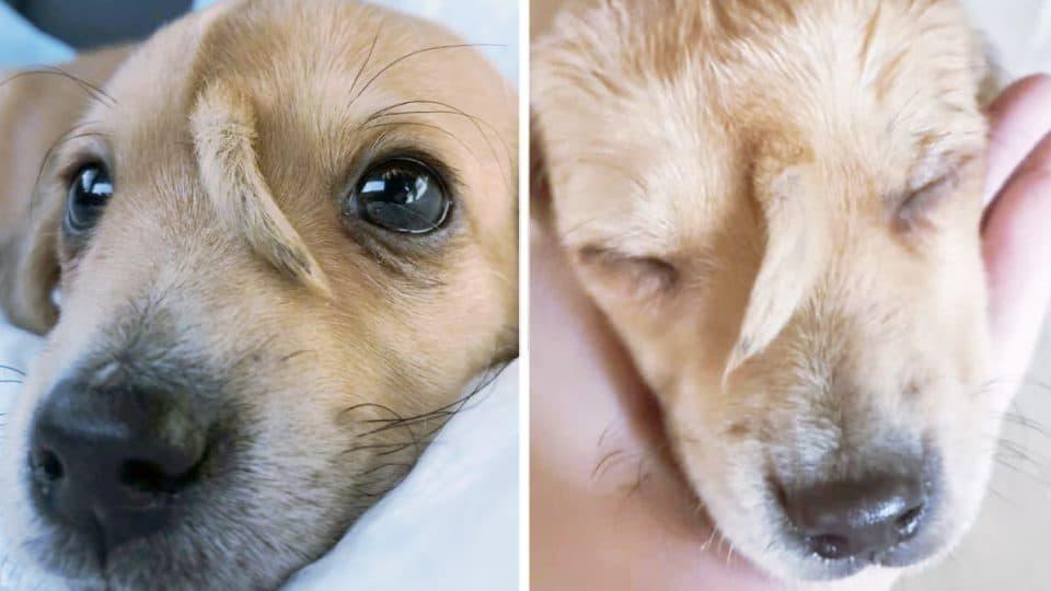Filhote de cão unicórnio é resgatado e surpreende a todos! 1