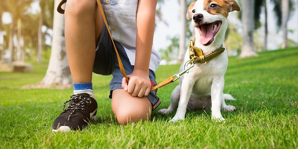 Como os cães escolhem sua pessoa favorita? 1