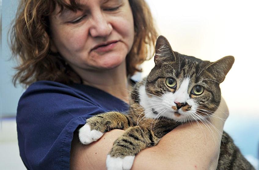 Castração de gato macho - saiba o que envolve 1