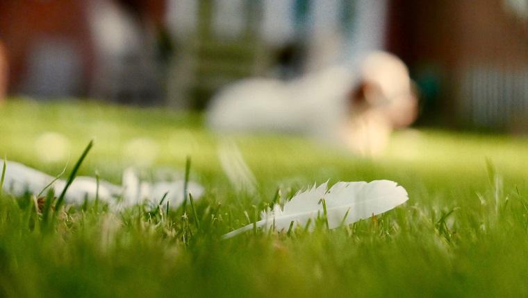 Reações alérgicas em cães: sintomas, gatilhos e tratamentos 3