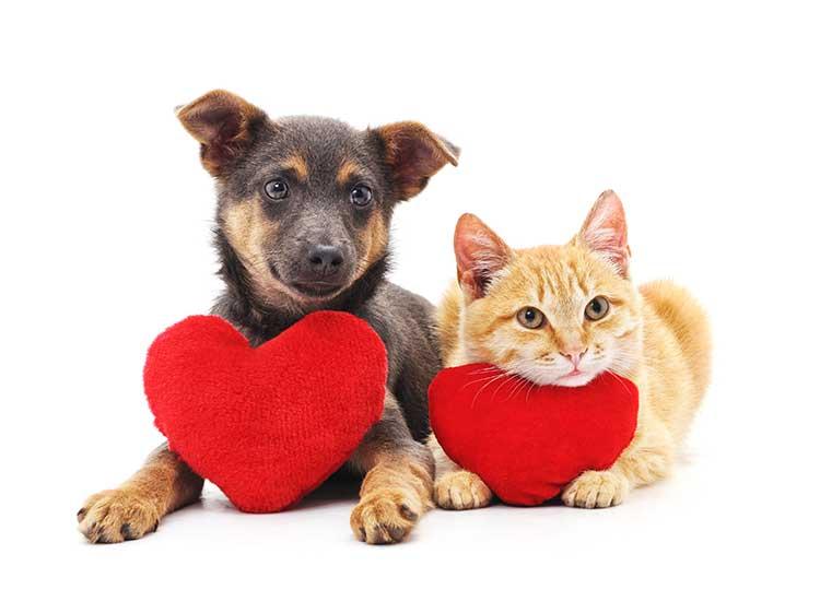 14 curiosidades sobre a saúde do coração do seu pet 1