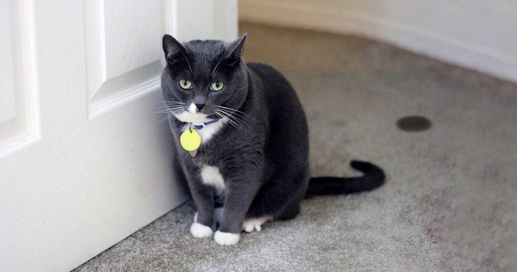 6 problemas de saúde mais comuns em gatos 1