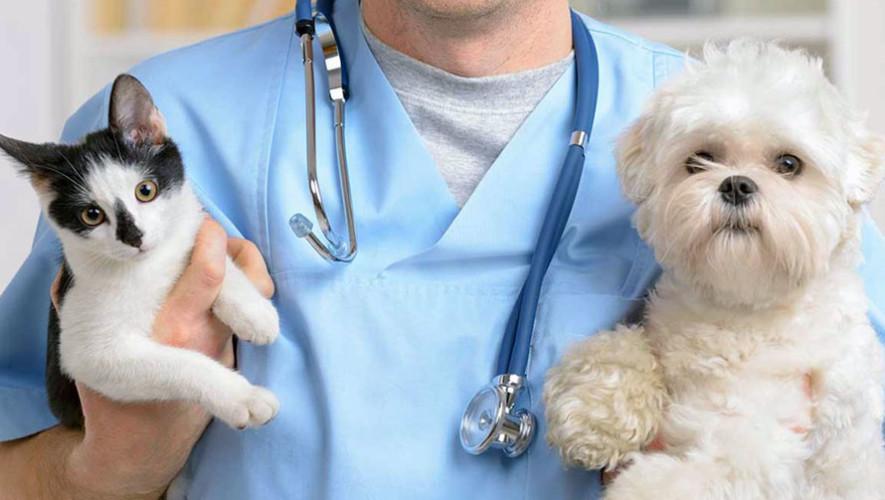 Principais doenças endócrinas e seus sintomas em cães e gatos 1