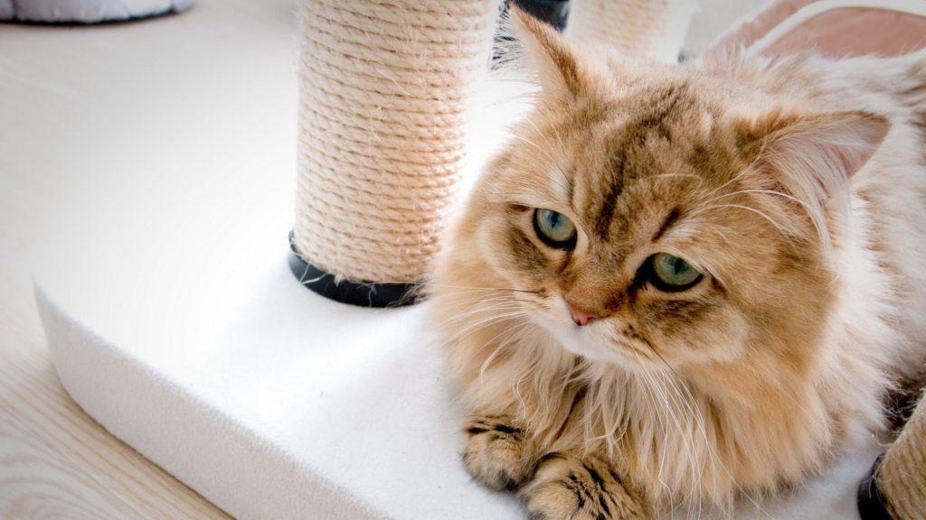 Depressão em Cachorros e Gatos: como identificar e tratar 2