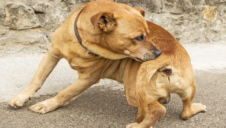 Reações alérgicas em cães: sintomas, gatilhos e tratamentos 2