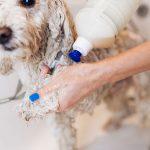 Pode usar condicionar de gente em cachorro?