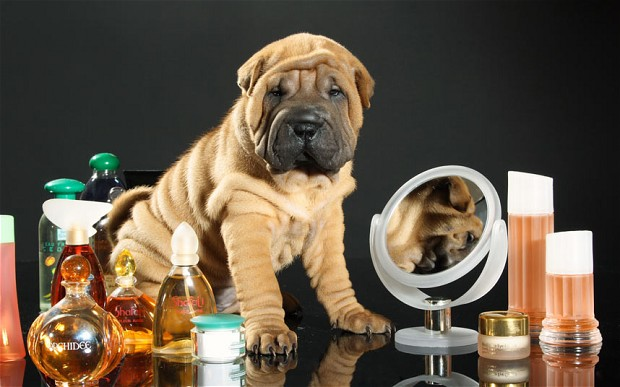 Perfume e colônias para cachorro são seguras