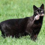 Vermes em gatos