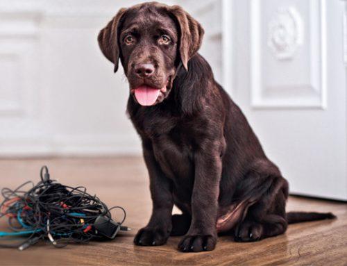 Segurança dos pets e aparelhos eletrônicos
