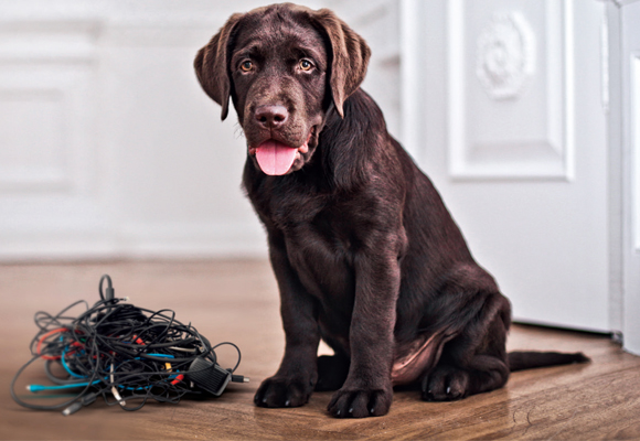Segurança dos pets e aparelhos eletrônicos 1