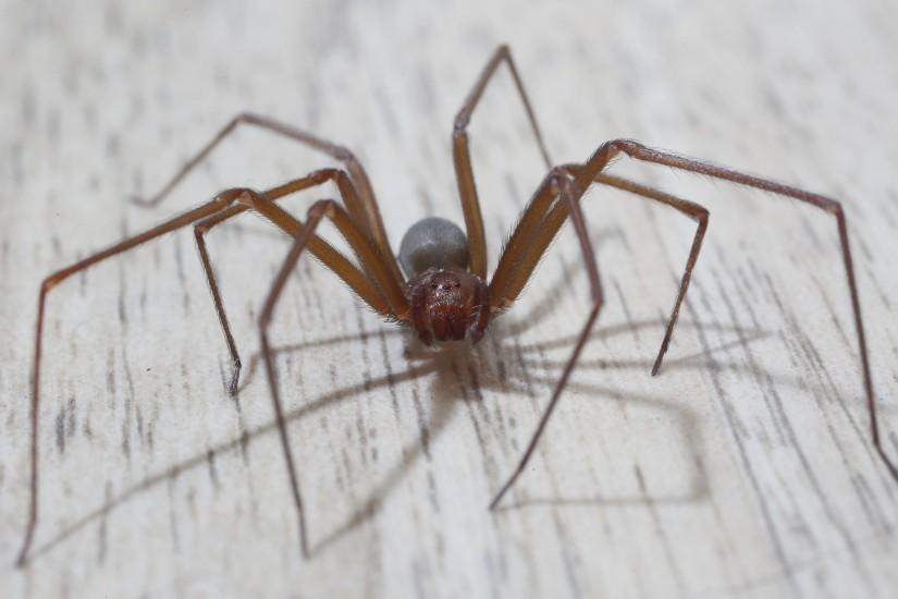 Picadas de insetos e aranhas em cães: sinais, sintomas e tratamento 8