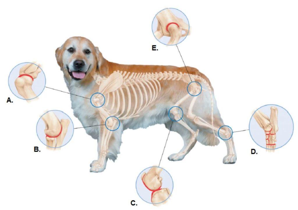 Artrite em cachorro
