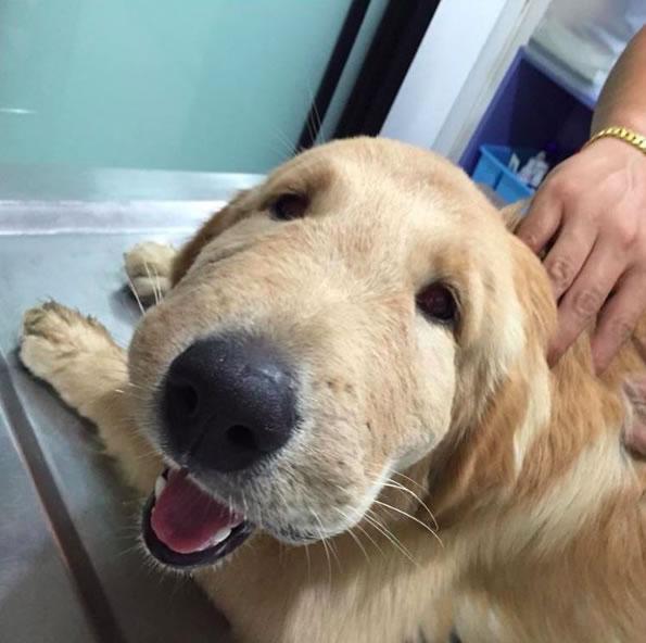 Picadas de insetos e aranhas em cães: sinais, sintomas e tratamento 7