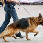 Cinco doenças ortopédicas comuns em cães 3