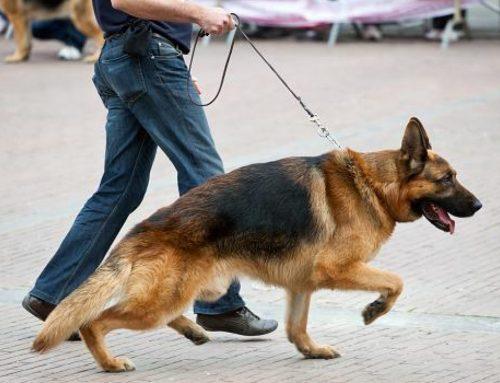 Cinco doenças ortopédicas comuns em cães