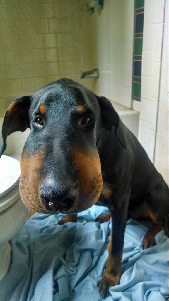 Picadas de insetos e aranhas em cães: sinais, sintomas e tratamento 5