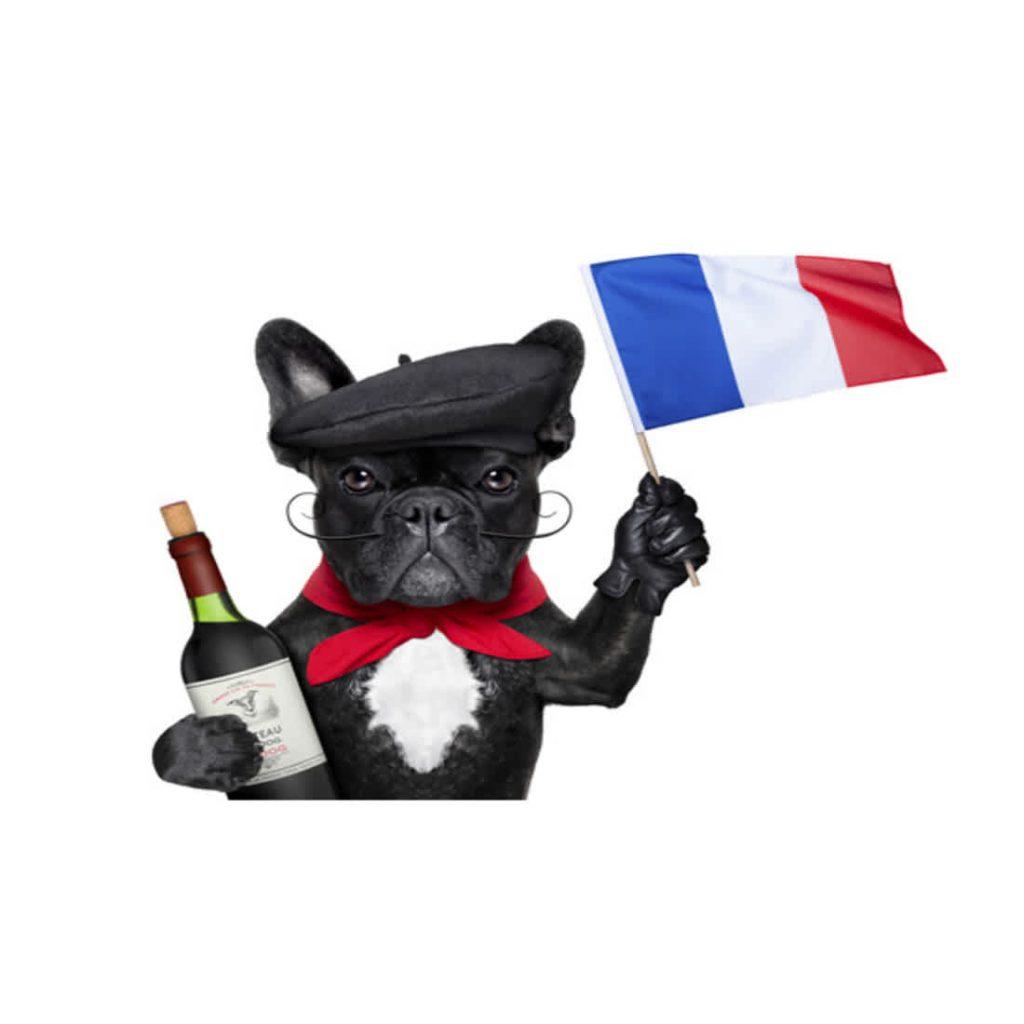 Curiosidades incríveis sobre os bulldogs franceses na atualidade 1