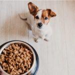 Como fazer cachorro ganhar peso de forma saudável 2