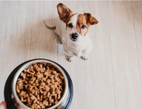 Como fazer cachorro ganhar peso de forma saudável