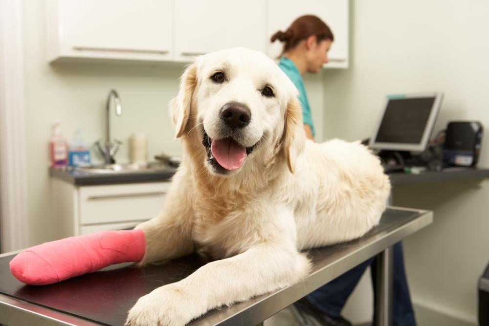 Ortopedia Veterinária 1