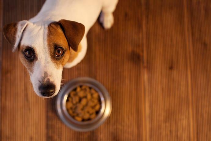 Por que meu cachorro não quer comer - causas e soluções 3