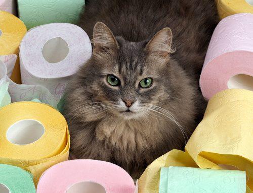 Diarreia em Gato – causas, o que fazer para parar