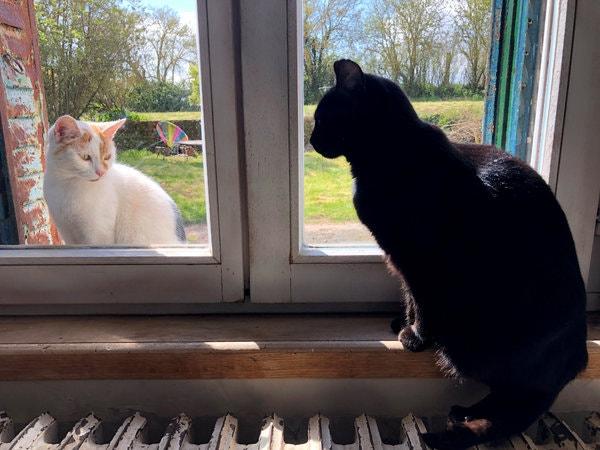 Vírus em gatos: FELV e FIV - Leucemia e AIDS felina 4