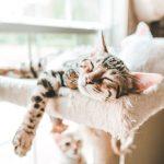 Sete recomendações para ter um gato caseiro saudável 6