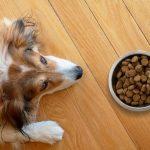 Dieta para cachorro com Síndrome de Cushing 8
