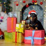 Alimentos proibidos e permitidos para Pets na Festa de Fim de Ano 7