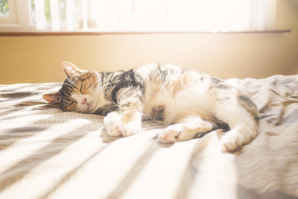 O seu gato está superaquecendo? Perigos e cuidados com o calor em felinos 13