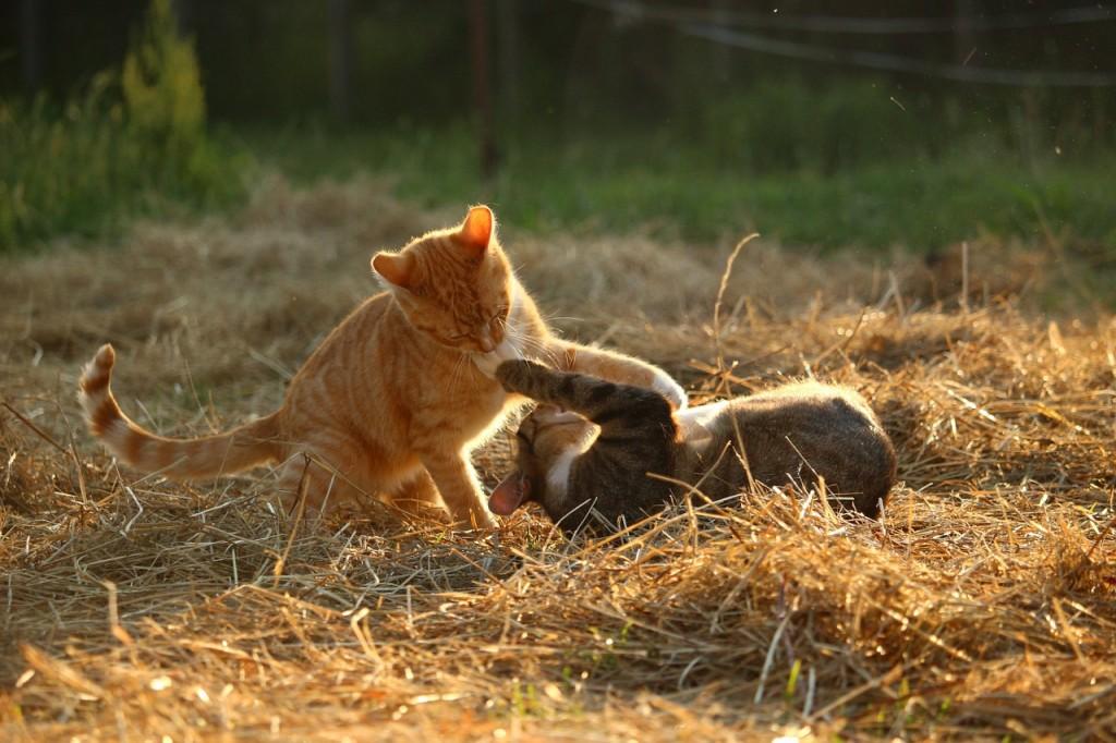 Perigos que os donos de gatos precisam estar cientes neste verão 16