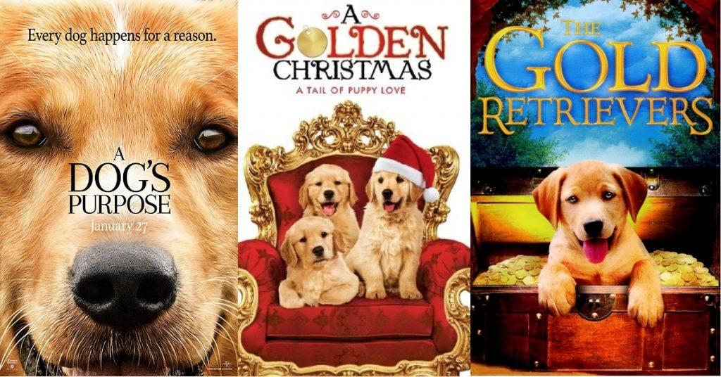 Curiosidades sobre os Golden Retriever que vão fascinar você 13