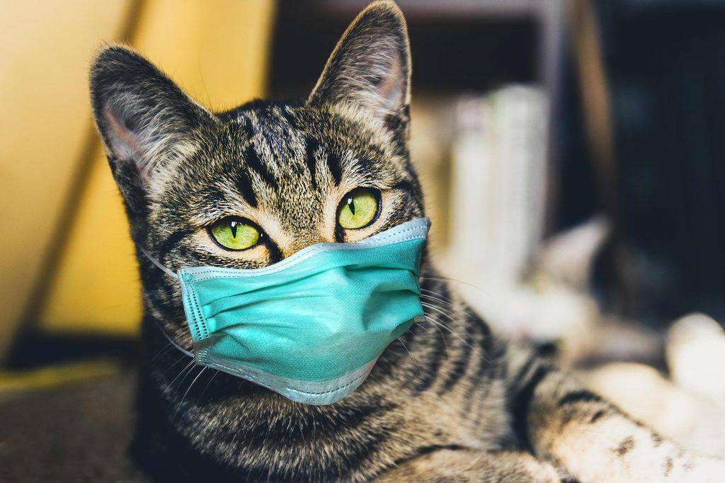 Gatos podem pegar COVID 19 / Coronavirus? 1