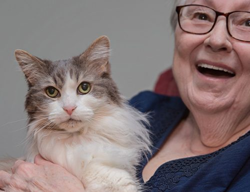 Quanto tempo os gatos vivem? Fatos sobre expectativa de vida do gato