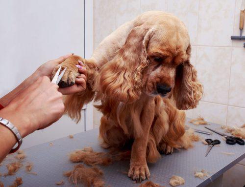 Cachorro estranho depois do banho e tosa, por que?