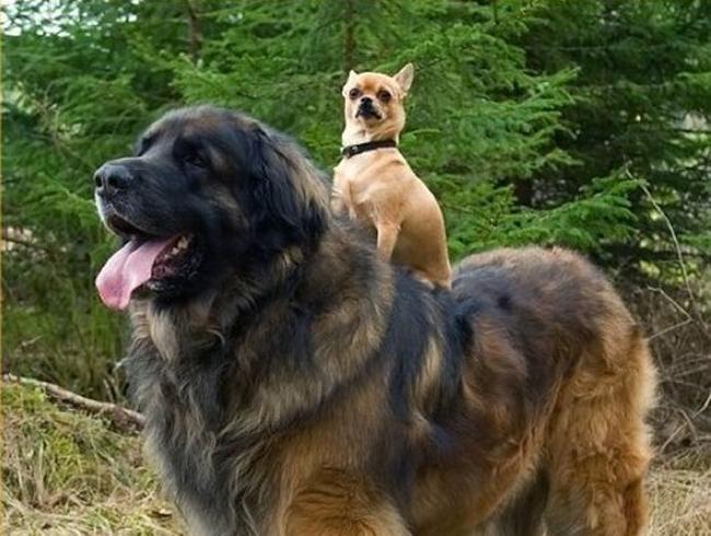 Quanto tempo vive um cachorro? Veja a expectativa de vida por raça e características 1