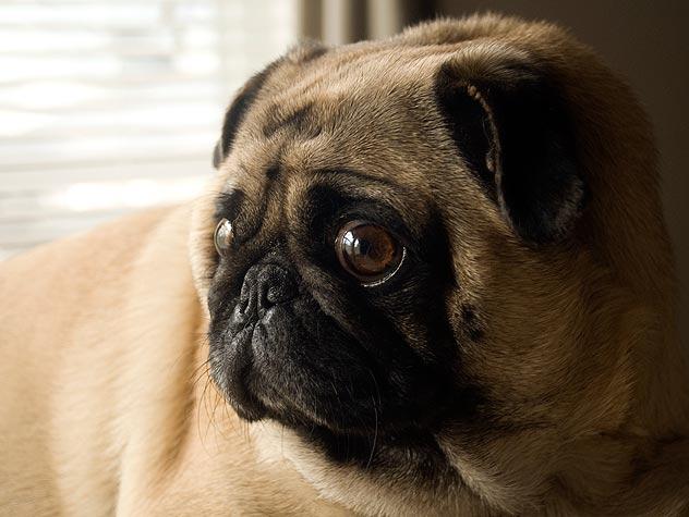 Como saber se o cachorro está ficando cego 2