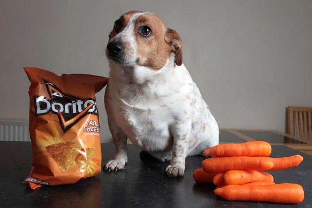 obesidade cachorro