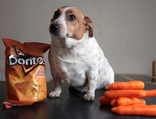 7 dicas para combater a obesidade canina