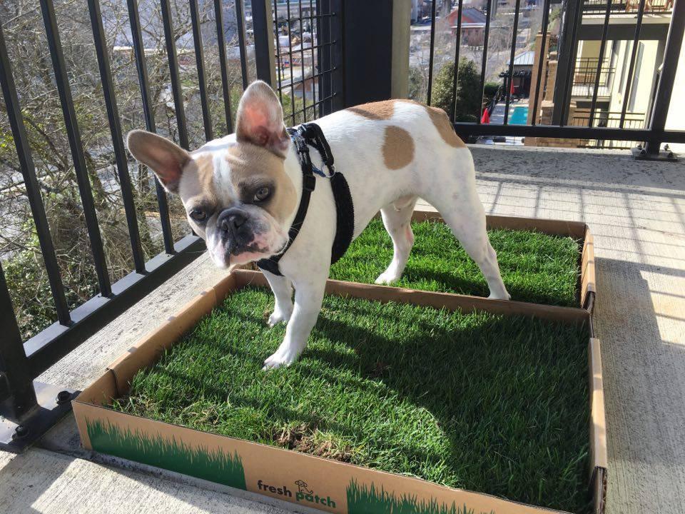 8 dicas para ter um cachorro em um apartamento no andar de cima 2