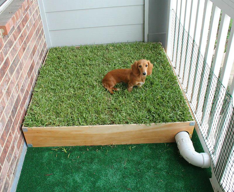 8 dicas para ter um cachorro em um apartamento no andar de cima 4