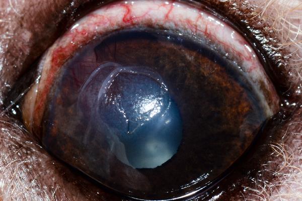 As 11 doenças mais comuns nos olhos caninos: como identificar e o que fazer 15