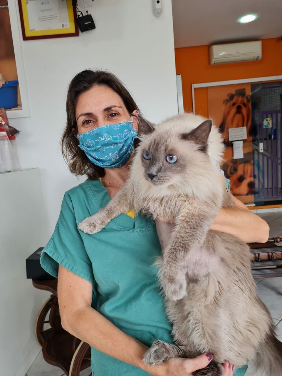 Dermatologia para gatos: tudo o que você precisa saber sobre a saúde da pele e pelo do seu felino - Dermatologista para gatos em São Paulo 3