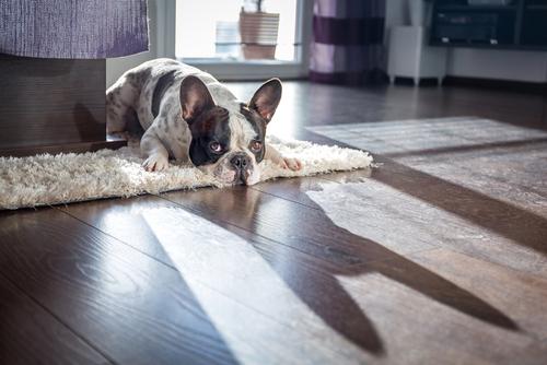 8 razões possíveis para a perda excessiva de pelo do seu cão 7