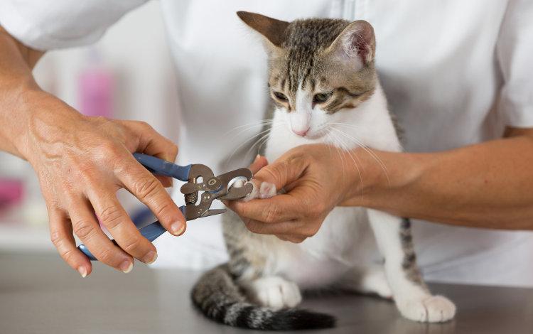 Cuidados gerais com gatos 1